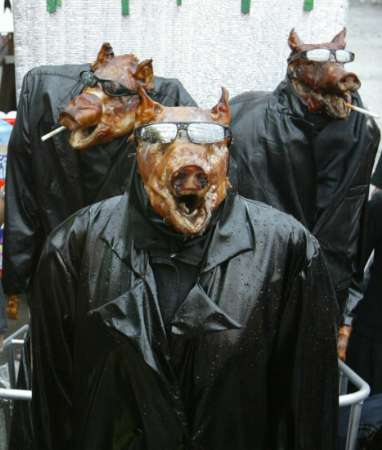 matrix-pigs